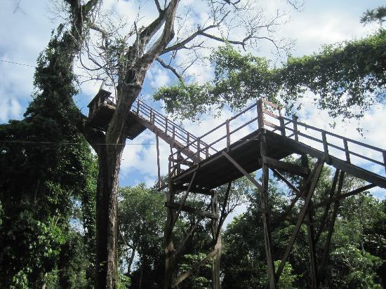 Iguazu Forest: Canoping