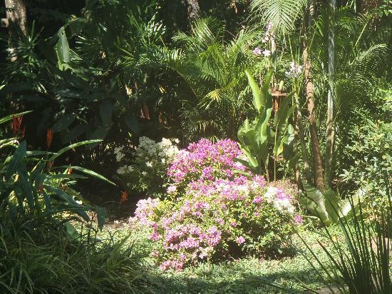 Bungalows Guesthouse: le jardin
