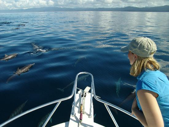 Crocodile Bay Resort: Dolphin watching on the Golfo Dulce (Sweet Gulf)