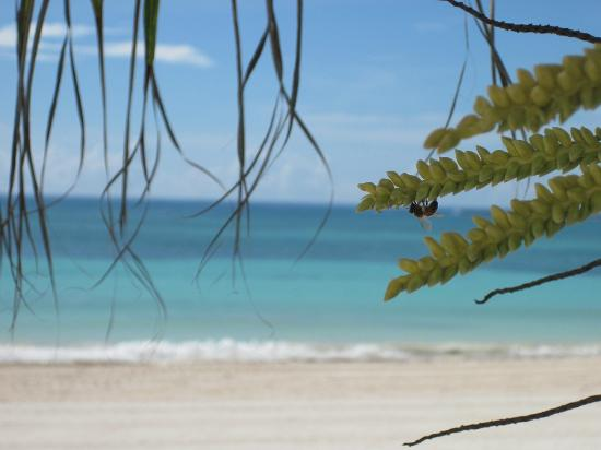 Barcelo Maya Colonial: magnifique plage section Beach