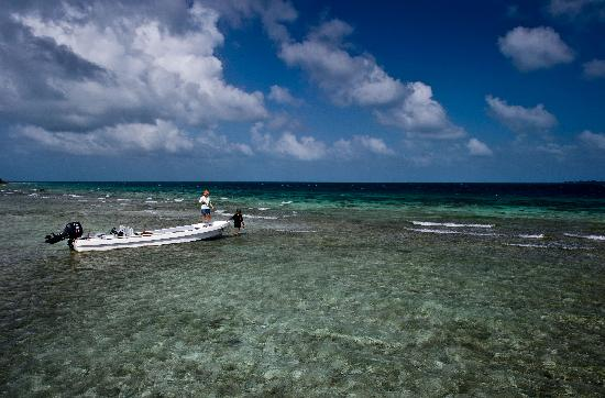Whipray Caye Lodge: Stalking the flats