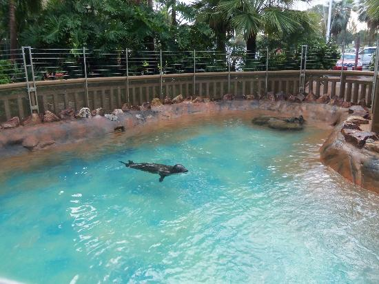 the rescued seals - picture of bahia resort hotel, san diego