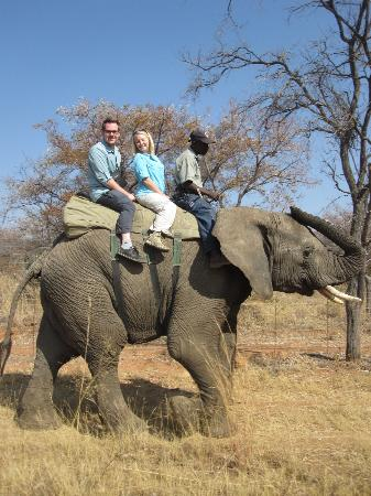 Adventures with Elephants: Us, Sugar, and Chova