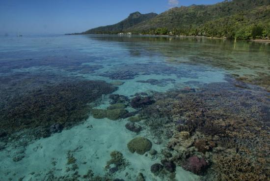 Sofitel Moorea Ia Ora Beach Resort: Le jardin de corail (près des pilotis)