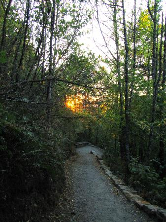 Bridal Veil Lodge: Trail across from the lodge