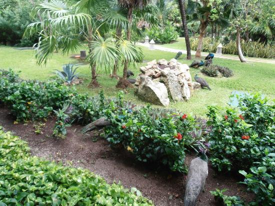 IBEROSTAR Paraiso Del Mar: les jardins