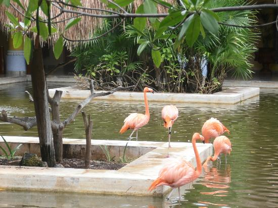 IBEROSTAR Paraiso Del Mar : les flamands rose