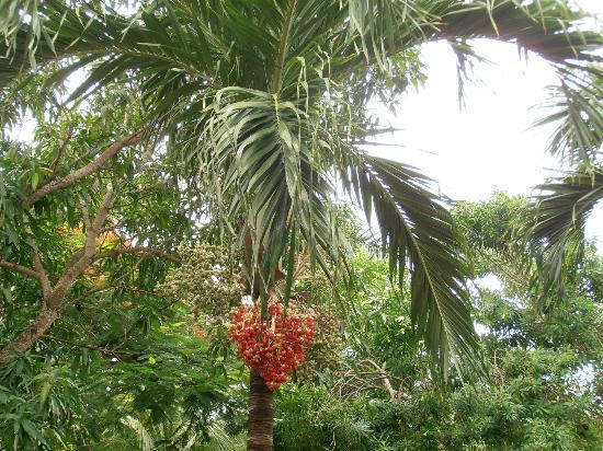 IBEROSTAR Paraiso Del Mar: végétation luxuriante !!!