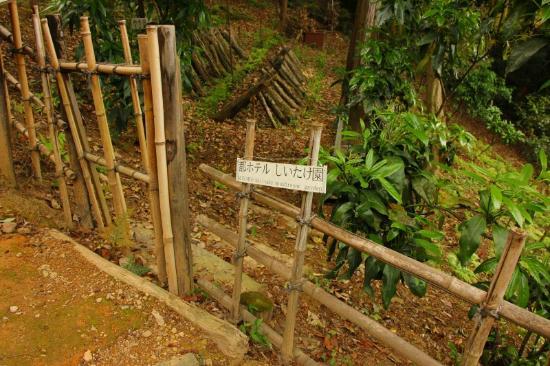 เดอะเวสติน มิยาโกะ เกียวโต: 敷地内を散策 しいたけ園