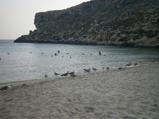 Spiaggia dei Conigli: verso sera tutti in spiaggia
