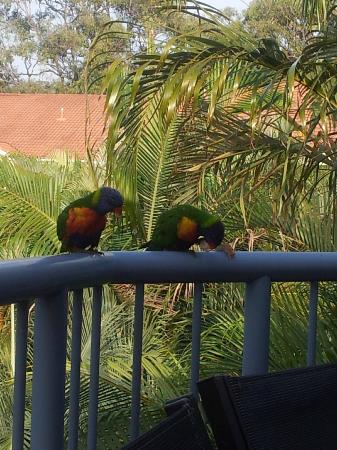 Sanctuary Lake Apartments: Our morning breakfast visitors