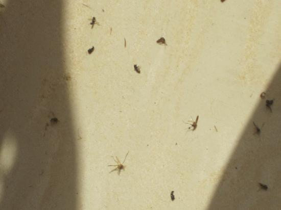 ‪فندق فور اس: more than 1 days worth of dead mosquitos in reception‬