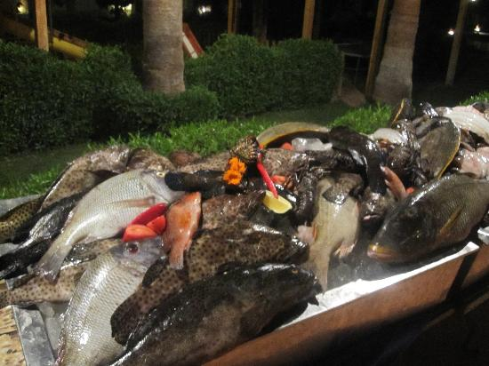 Swiss Inn Resort: fish market