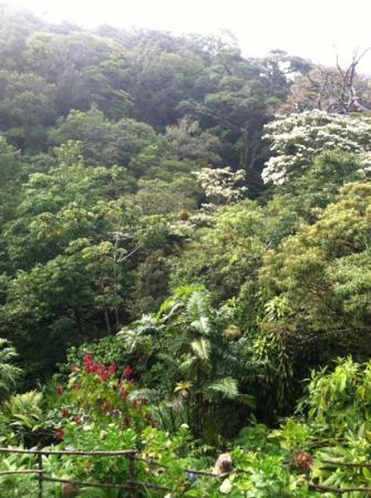 Monteverde Lodge & Gardens: view from our room