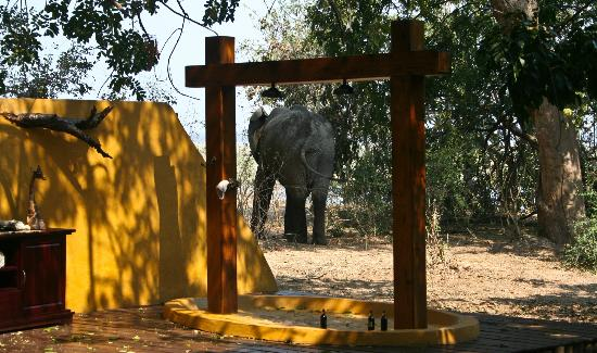 Sausage Tree Camp: elephant walked right past our pool and outdoor shower into the rest of the camp