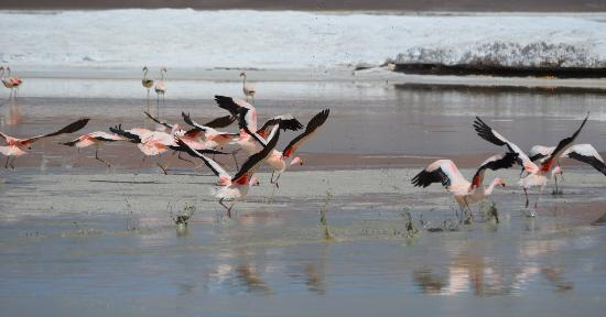 Awasi Atacama - Relais & Chateaux: Morning Flamingos