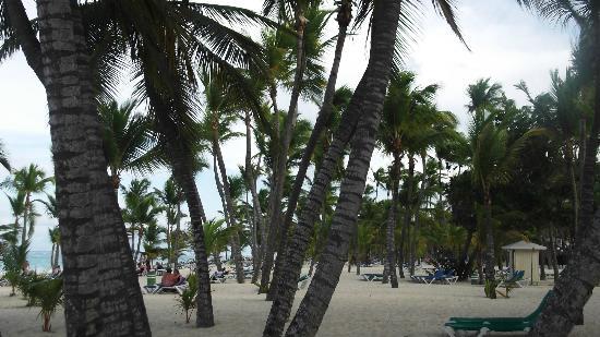 ClubHotel Riu Bambu: Playa