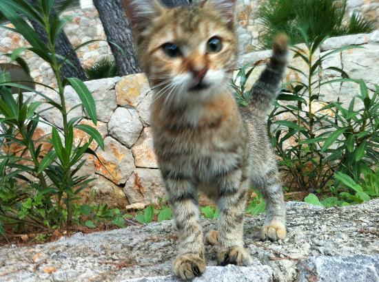 Hotel Zagreb : sweet kit kitty