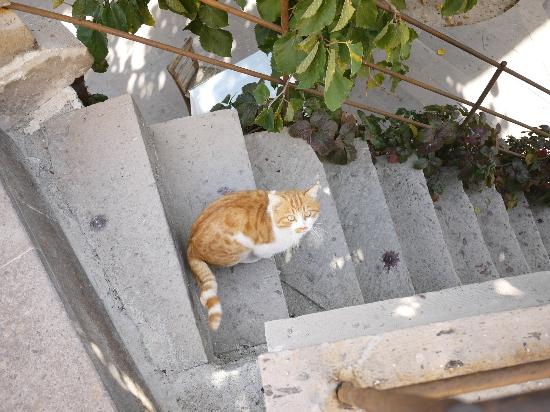 Dervish Cave House: Nice cat, comes to eat every morning