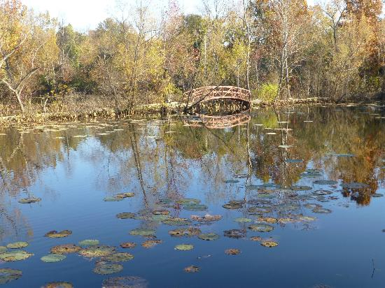 Lichterman Nature Center: One of the ponds