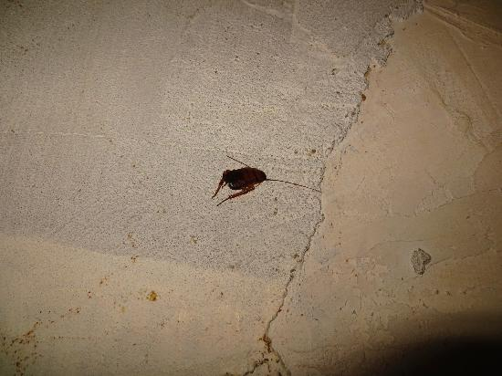 Pousada Yemanja : dead cockroach under my mattress