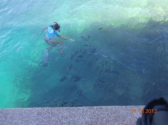 El Rio y Mar Resort: Snorkeling Area