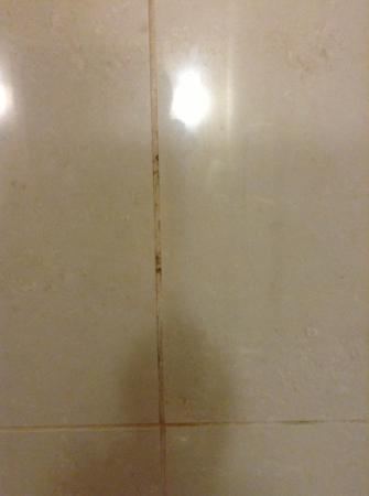 Doubletree Collinsville/St. Louis: gross mold/grime/dirt in the shower