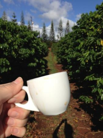 Kauai Coffee Company: take a cup with you along the tour