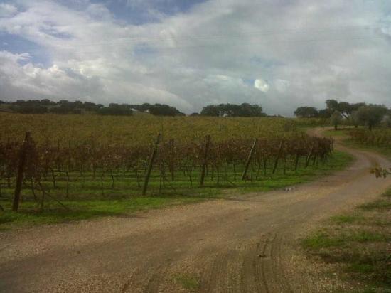Herdade da Malhadinha Nova - Country House & Spa: arriving at the hotel through the vineyards