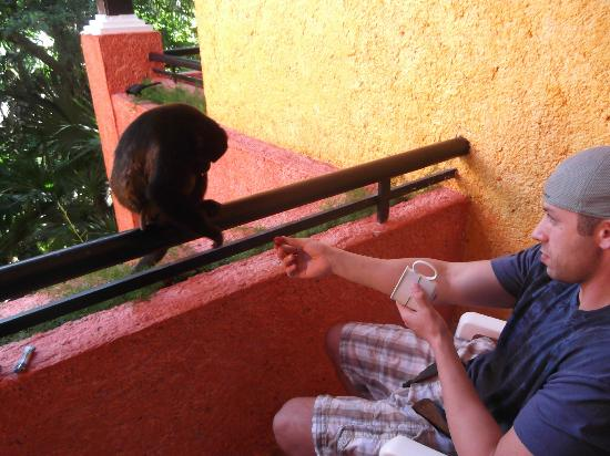 Iberostar Tucan Hotel: Don't feed the monkeys.