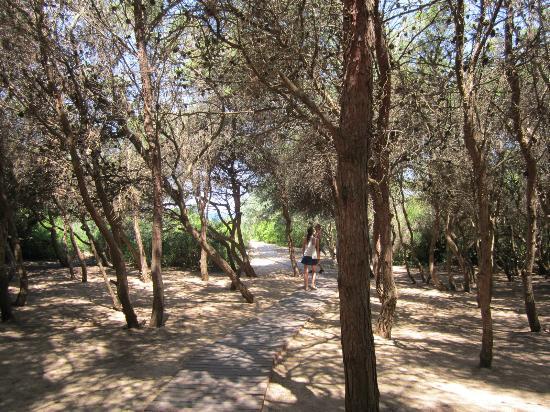 Residence Kale: pineta limitrofa c.a. 5 km