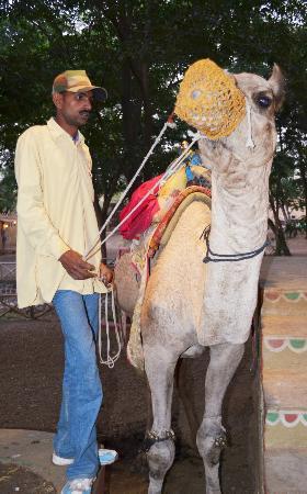 Chokhi Dhani: camel ride