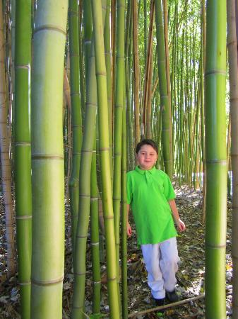 Zoo Atlanta: Reese in the bamboo forest