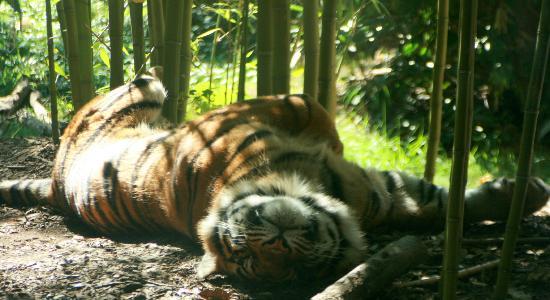 Zoo Atlanta: Still playing