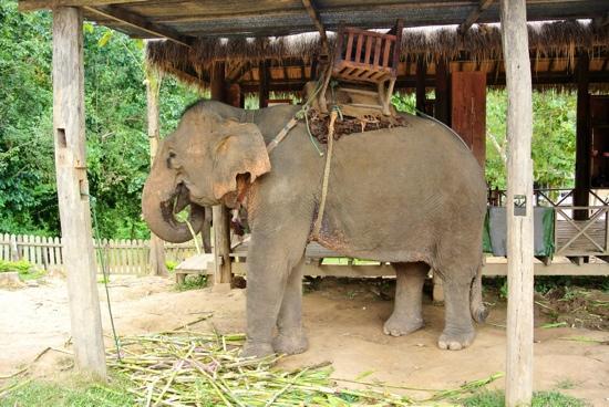 Belmond La Residence Phou Vao: Village des éléphants
