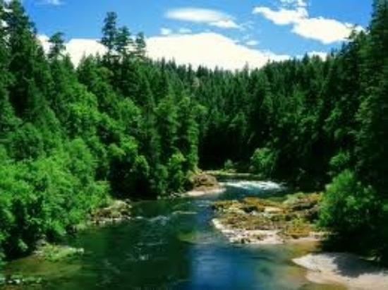 Best Western Garden Villa Inn : River