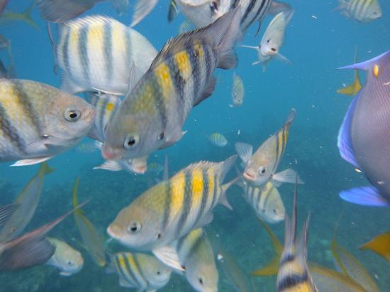 The Tropical at Lifestyle Holidays Vacation Resort: More fishes
