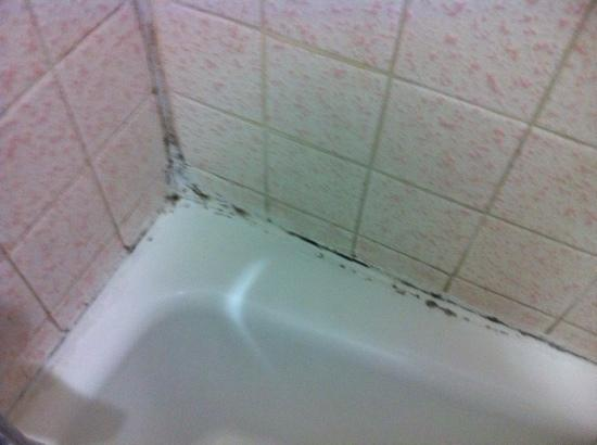 Royal Inn Motel Long Beach Mold In Shower