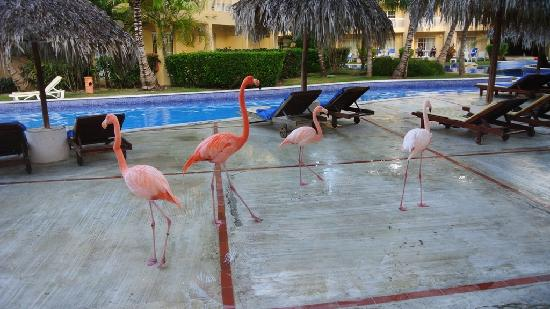 Dreams Punta Cana Resort & Spa: FLAMENCO