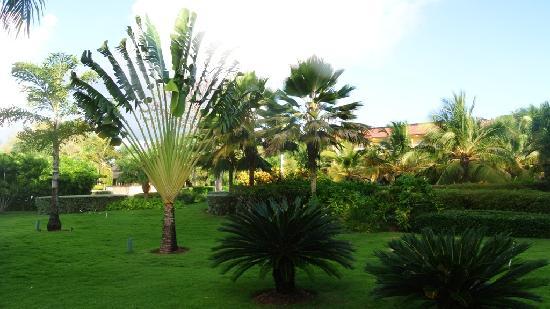 Dreams Punta Cana Resort & Spa: GARDEN