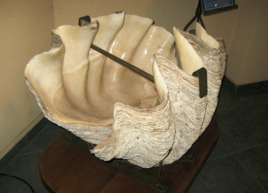 Museo del Mar: Una joya por su forma y tamaño