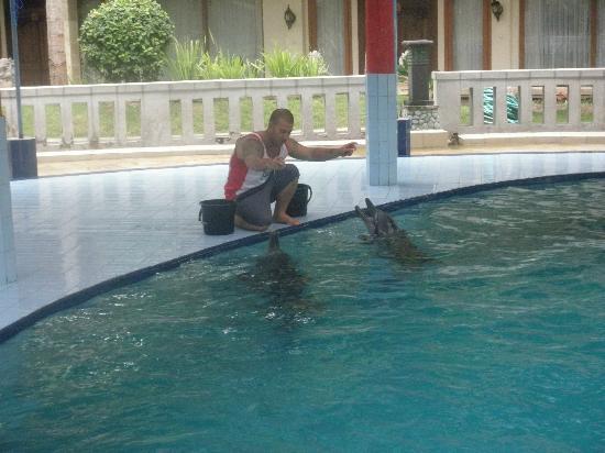 Melka Excelsior Resort Hotel: Dolphins