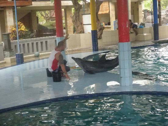 โรงแรม เมลกา เอ็กเซลซิเออร์: Dolphins
