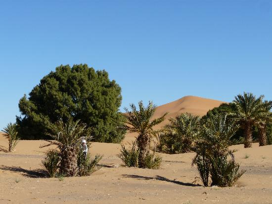 Riad Aicha: desert