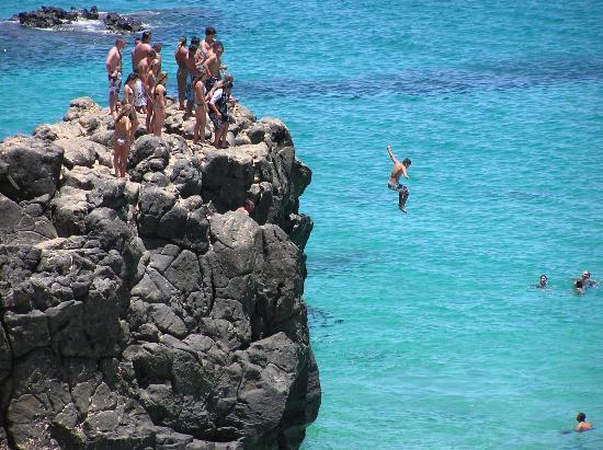 LocationPhotoDirectLink G60647 D938764 I52231385 The_Surf_Bus Haleiwa_Oahu_Hawaii on Hawaiian Green Sea Turtle
