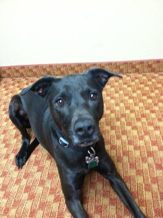 Holiday Inn Express Hotel & Suites Denver Littleton : Pet Friendly Hotel