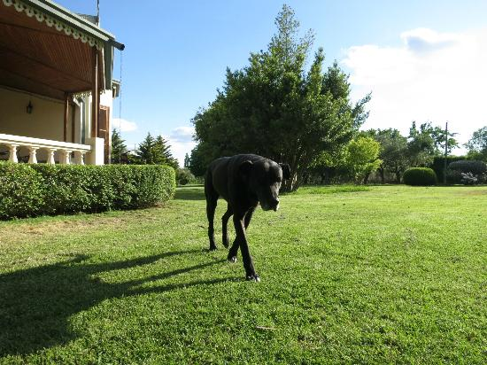 Villa Victoria Lodge: friendly great dane - sitting outside was just great.