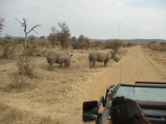 Sanctuary Makanyane Safari Lodge: Rhinos up close and personal