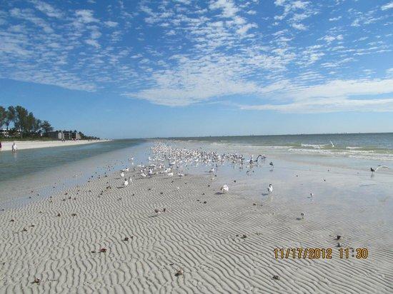 Dog Beach : Birds on Beach