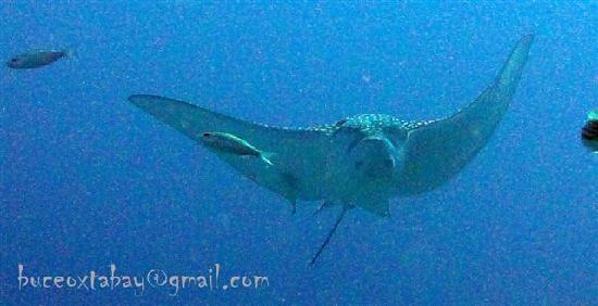 Buceo Xtabay: Aguila del mar